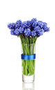 Muscari - hyacinth in glass Royalty Free Stock Photography