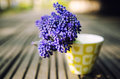 Muscari in a vase bouquet of delicate grape hyacinths small green Stock Photos