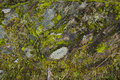Musci mosses backgrounds and texturenatural texture of Stock Images