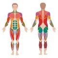 muscle man anatomy,