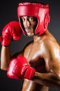 Muscular boxer in studio Stock Image