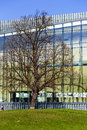 Museum of the history of polish jews fragment warsaw poland march tree grows in front designed by finnish architect rainer Royalty Free Stock Photos