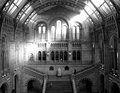 Museum of natural history london view the stairs inside the in england Royalty Free Stock Photo