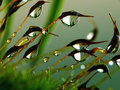 Musgo da floresta Foto de Stock