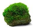 Musgo e rocha Imagens de Stock