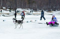 Mushing at Baikal Fishing 2012 Stock Images