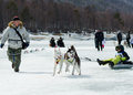 Mushing at Baikal Fishing 2012 Royalty Free Stock Photo