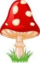 Mushroom amanita Royalty Free Stock Photos