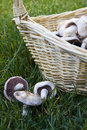 Mushroom and basket Stock Photography