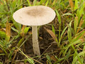 Mushroom Close-up 1 Royalty Free Stock Photo