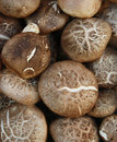 Mushroom close up brown food Stock Images