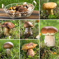 Mushroom collage with different pictures Royalty Free Stock Photo