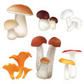Mushroom collection isolated on white background mushrooms agaric set Stock Photos