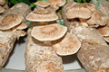 Mushroom cultivation cultivation,mushroom cultivation,mushroom Royalty Free Stock Photos