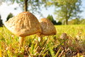Mushroom delight mushrooms growing wild in east tennessee Stock Photos