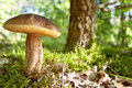 Mushroom in the forest Royalty Free Stock Photo