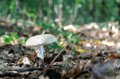 Mushroom on the forest floor Royalty Free Stock Photography