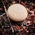Mushroom on forest floor