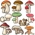 Mushroom forest set on a white background