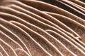 Mushroom Gills Royalty Free Stock Photo