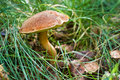 Mushroom in the grass. Royalty Free Stock Images