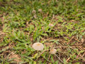 Mushroom on a Grass Royalty Free Stock Photo
