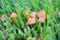 Mushroom and grass Royalty Free Stock Photo