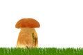 Mushroom in the grass and on a white background Stock Photography