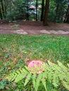 Mushroom on the green grass Royalty Free Stock Photo