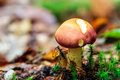 Mushroom kingdom picture of a forest in the woods of bavaria in germany in fall Stock Photography