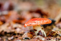 Mushroom kingdom picture of a forest in the woods of bavaria in germany in fall Royalty Free Stock Image