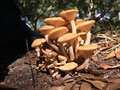 Mushroom kingdom a small cluster of fungus Royalty Free Stock Photos
