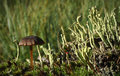 Mushroom and moss. Stock Photography