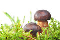 Mushroom in moss Royalty Free Stock Photo