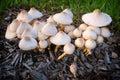 Mushroom patch Stock Photos