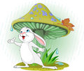 Mushroom Rabbit Royalty Free Stock Image