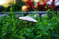 Mushroom a after rain in the green grass Royalty Free Stock Photography