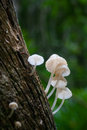 Mushroom single in the deep forest Royalty Free Stock Photos