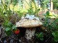 Mushroom and sprigs of cranberries.