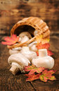 Mushrooms with autumn leaves and wicker basket close up on a wooden background Royalty Free Stock Images