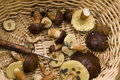 Mushrooms in basket Stock Images