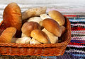 Mushrooms in a basket autumn season mushroom boletus edulis cep Royalty Free Stock Image