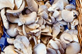 Mushrooms in basket on market Royalty Free Stock Photography