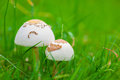 Mushrooms beauty in the nature with Stock Photography