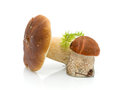 Mushrooms - Boletus edulis and Letstsinum Stock Photo