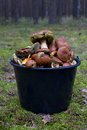 Mushrooms in a bucket Royalty Free Stock Photos
