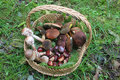 Mushrooms and chestnuts in a wicker basket Royalty Free Stock Photo