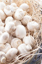 Mushrooms a close up photo of a edible known as agaricus in a basket on a bright solid background Royalty Free Stock Photos