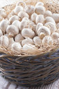 Mushrooms a close up photo of a edible known as agaricus in a basket on a bright solid background Royalty Free Stock Image