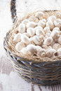 Mushrooms a close up photo of a edible known as agaricus in a basket on a bright solid background Stock Image